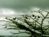 69-birds-flying-Nakuru