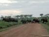69-elephants-crossing-