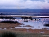 69-flamingos-Nakuru