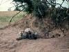 69-hyena-Serengeti-2