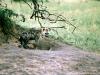 69-hyena-Serengeti