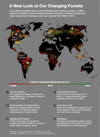 map-global-forest-change-final_73495_600x450
