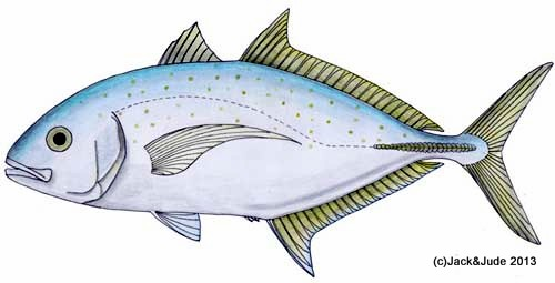 Yellowspotted-trevally