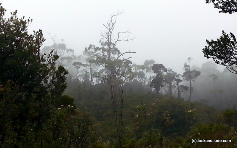 misty rain brought a few days rest