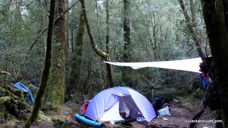 Twin Huon Pine Camp