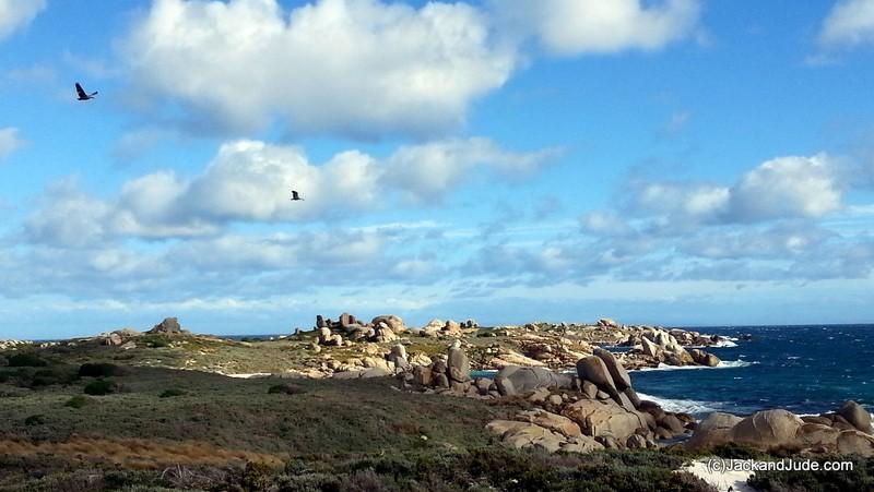Preservation Island